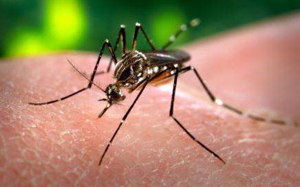 Dengue 1 436x272 - 19 Perguntas frequentes sobre Febre Amarela