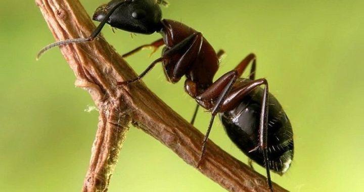 Asd 720x380 - Imunoterapia: 98% de eficácia no tratamento de alergia a insetos.