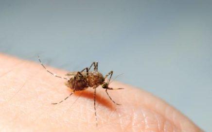 zika 436x272 - Mais de mil cidades podem ter surto de dengue, zika e chikungunya
