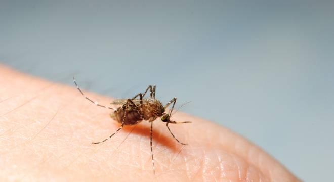 zika - Mais de mil cidades podem ter surto de dengue, zika e chikungunya