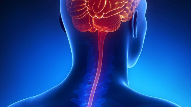 meningites - Meningite: Conhecendo a doença